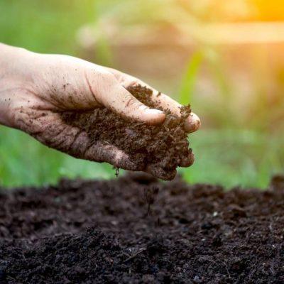Soil-otkugbtxj0opacpuvetwkf4pgu3zm2vv8s9ca13kio