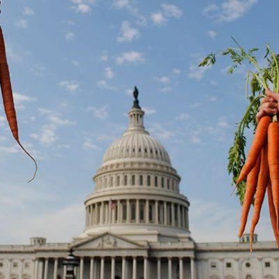 Nsac-carrots-capitol--otksth5pmg4eda7ciz0tg9rqic6nob8vthswkccy3k