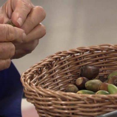 191115-acorn-bites-indigenous-foodways-nutrition-stewardship-8-acorn-processing-2-700x394-1-ozyob8ennz2ld01g2k8r8rh235hc2a39phgioiqcgw