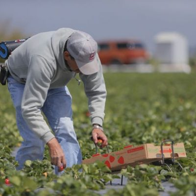 Farmworker-otksspwe49330laxy58mxynda5x0h38o1qvtnbhd40