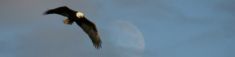 Eagleheader800-771x188