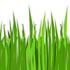 Grass_roots_logo-style_image_-_smaller___cropped