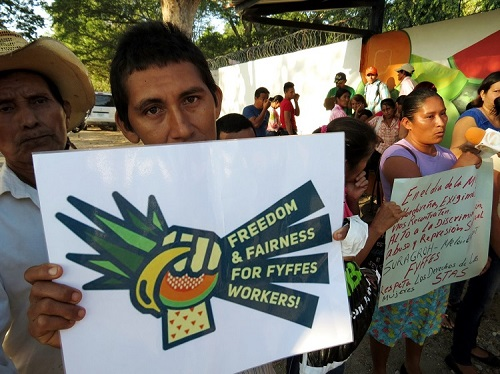 Fyffes_fair_trade_1_action_network