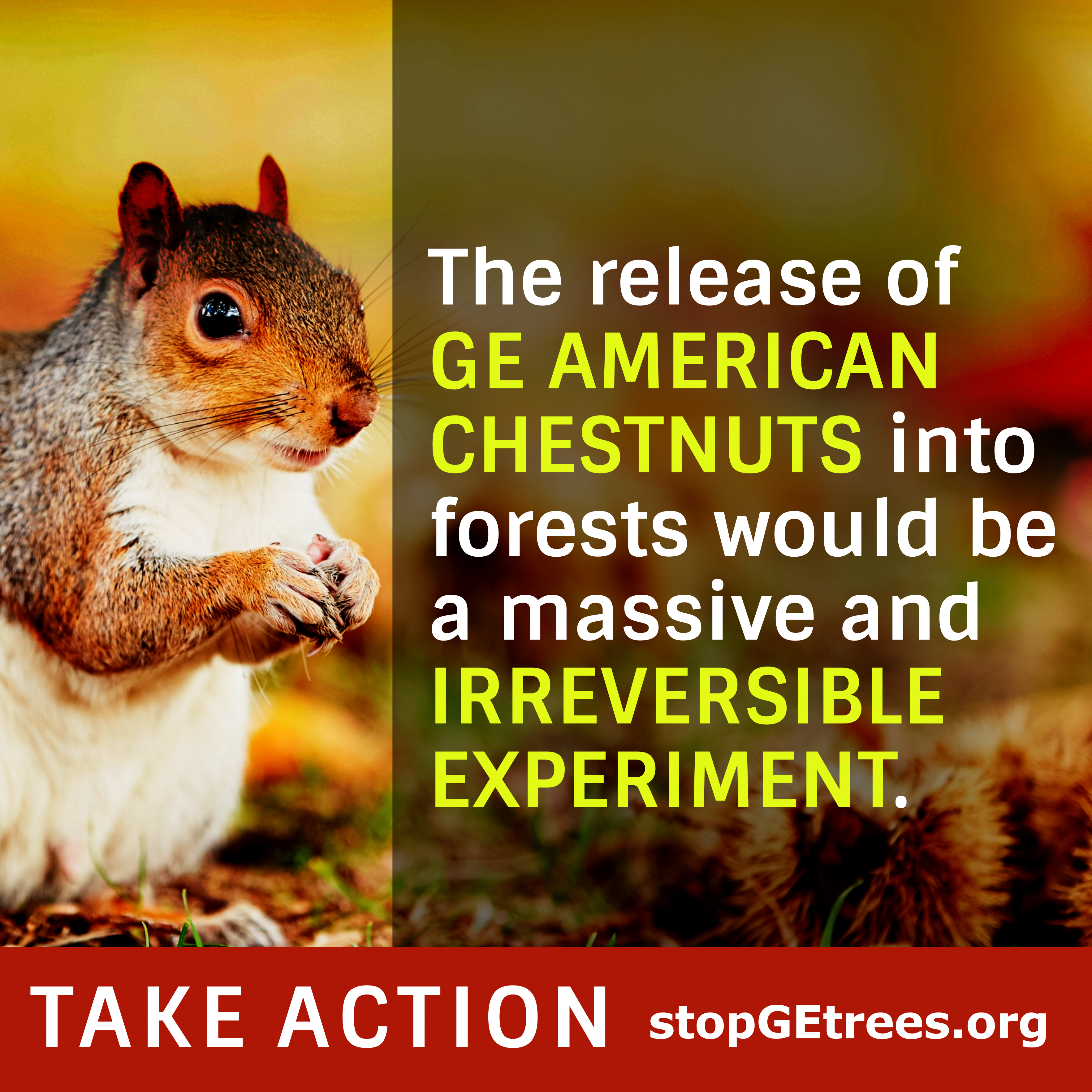 Take-action-square-petition-squirrel-graphic