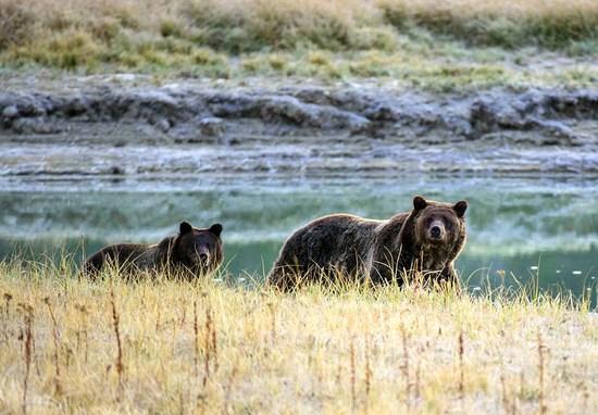 Grizzlies_(karen_bleier_afp_getty_images)