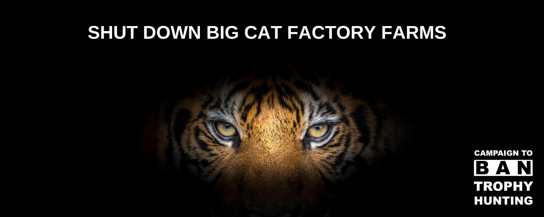 Banner_an_petition_shut_down_big_cat_factory_farms