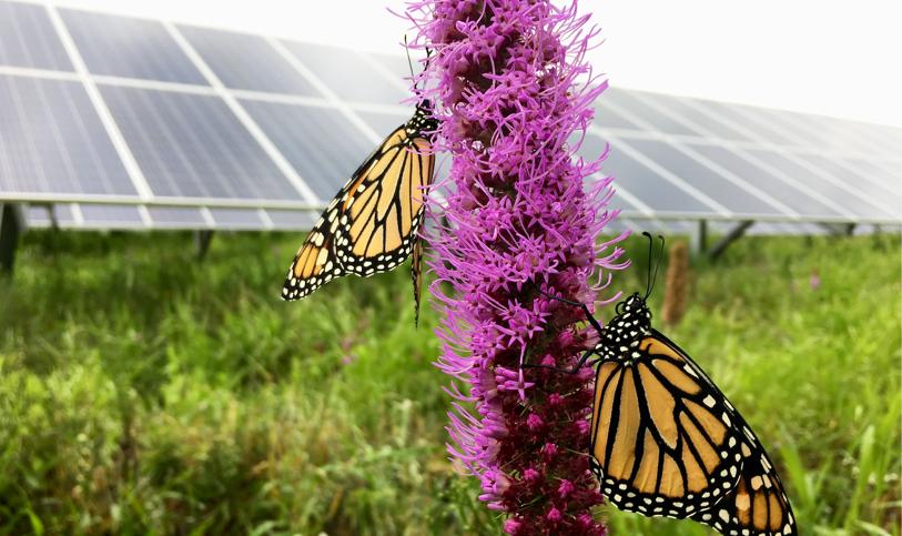 Butterfly_solar