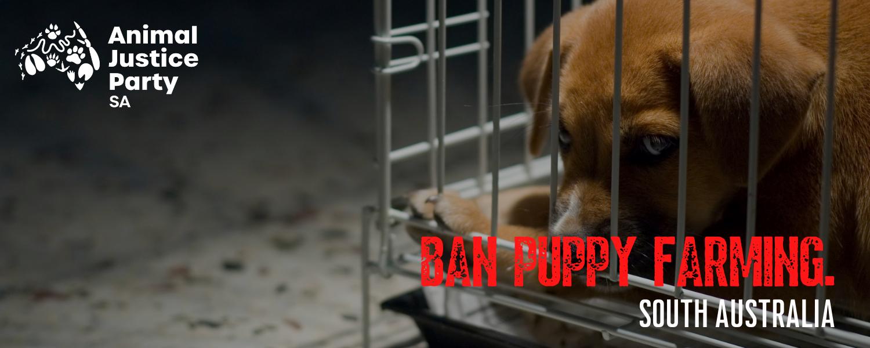 Ban_puppy_and_kitten_farming_sa_(2)