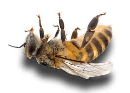 Mayor and councilors: We need local action to save the bees