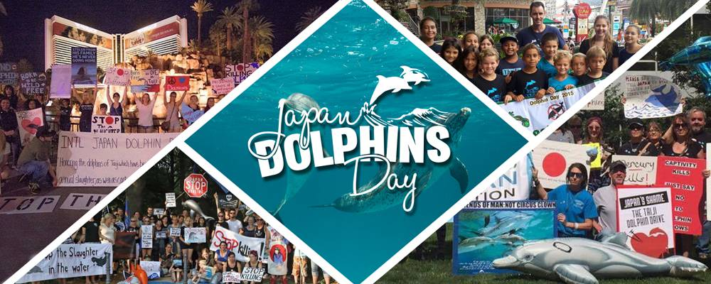 Join us for Japan Dolphins Day
