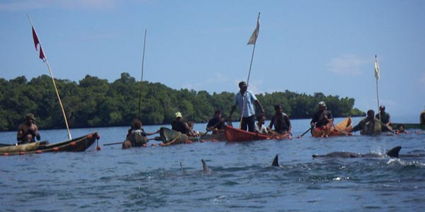 Solomon Islands Dolphin Hunt
