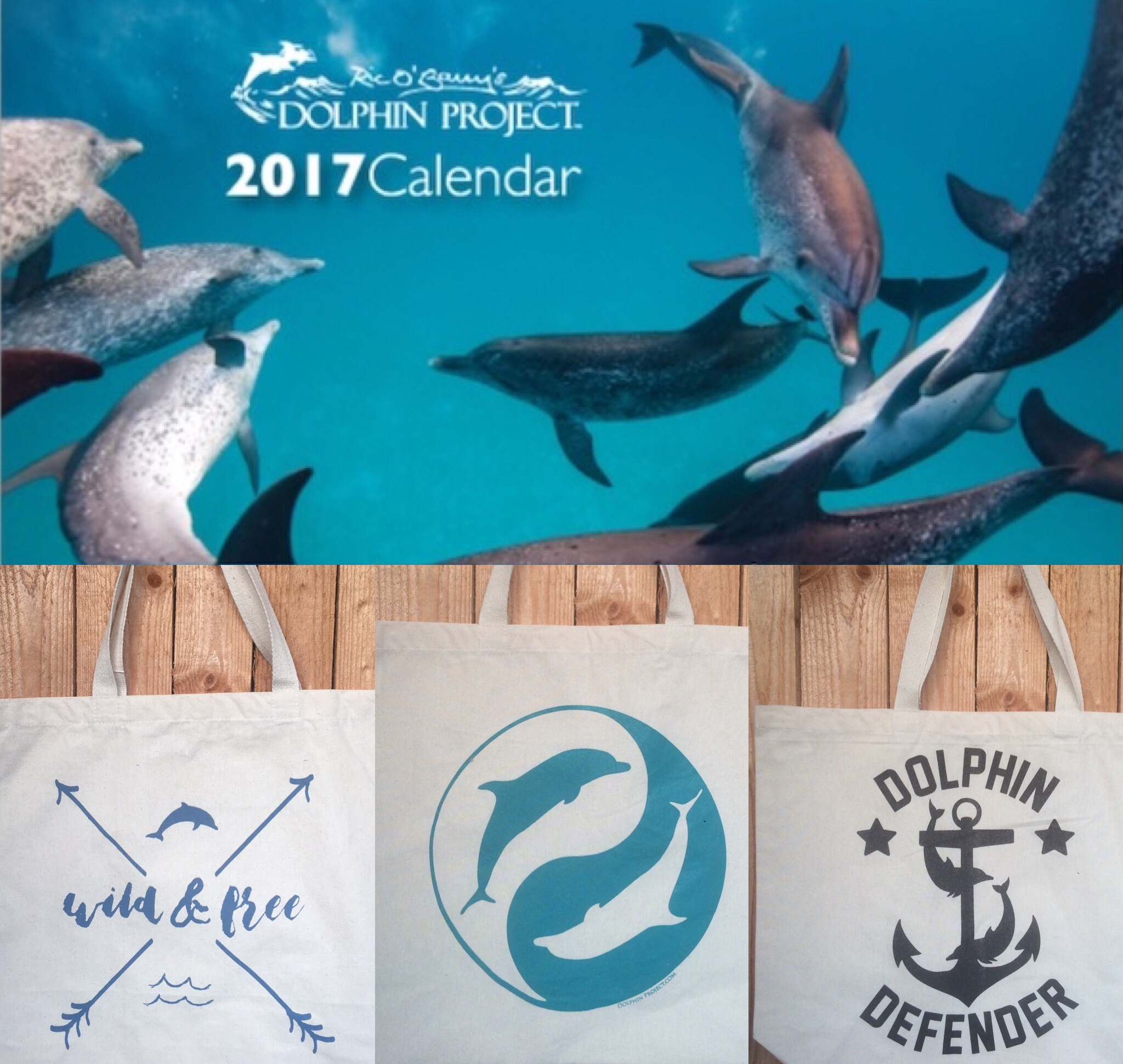 Dolphin Project's birthday special