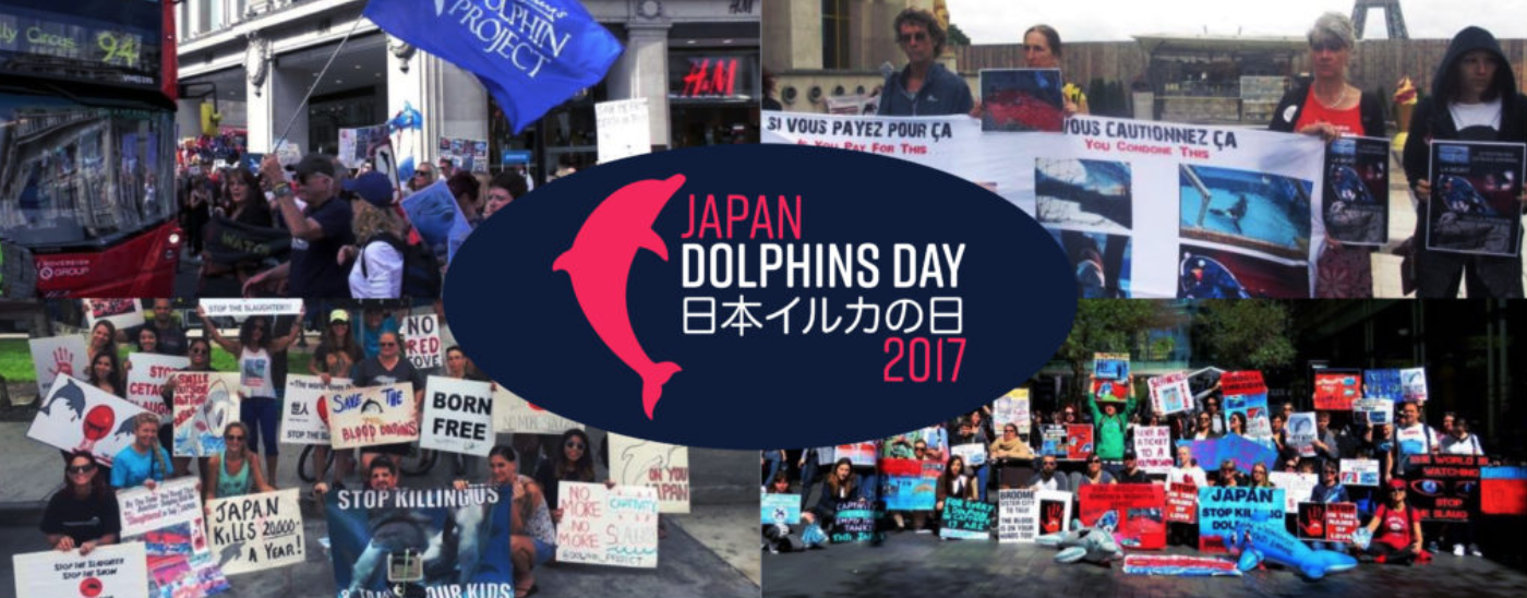 Japan Dolphins Day 2017