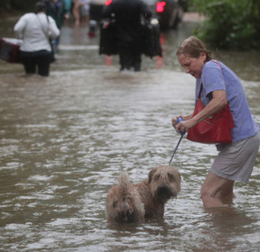 Woman in flooding with dog