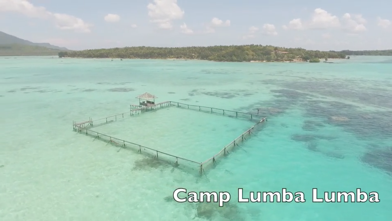 Camp LumbaLumba, the world's first permanent rehabilitation facility for rescued dolphins, Indonesia. Credit: DolphinProject.com