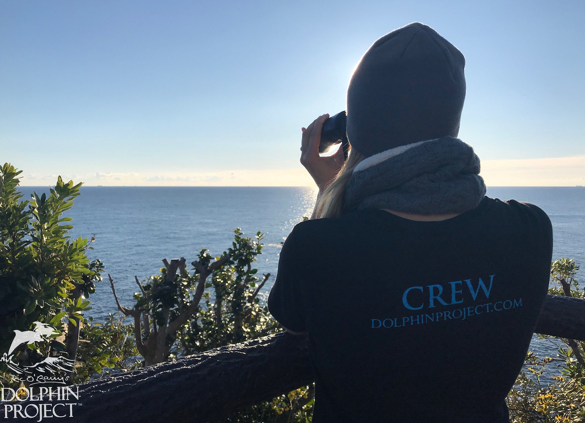 Dolphin Project's Cove Monitor Program