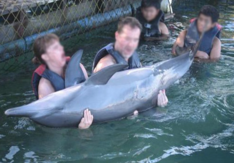 Dolphins are play toys for tourists at Dolphin Lodge Bali