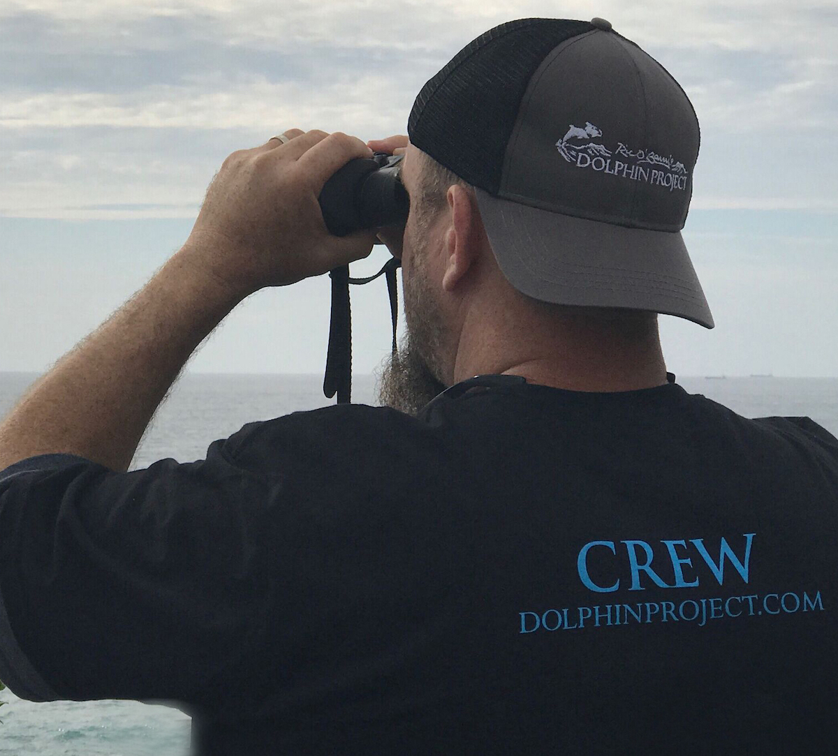 Dolphin Project Returns to the Cove