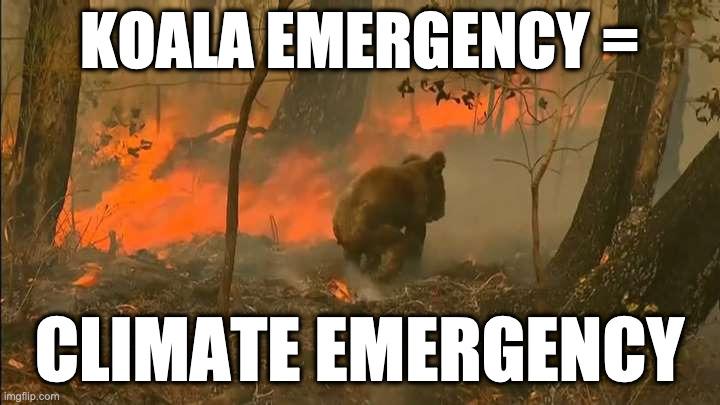 Koala Emergency = Climate Emergency